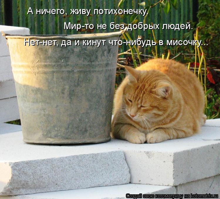 Котоматрица: А ничего, живу потихонечку.  Мир-то не без добрых людей.  Нет-нет, да и кинут что-нибудь в мисочку...