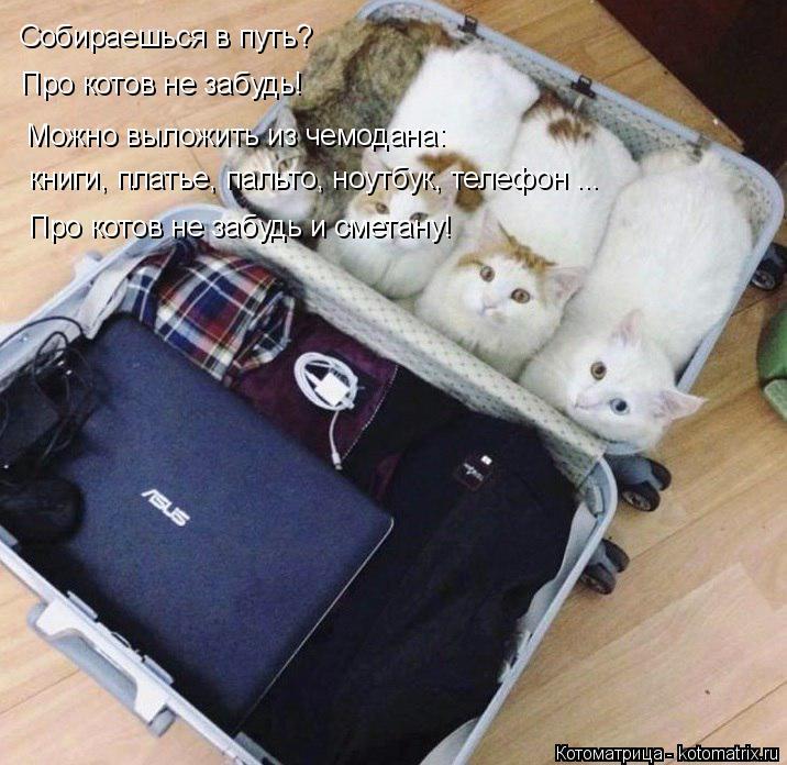 Котоматрица: Собираешься в путь? Про котов не забудь! Можно выложить из чемодана: книги, платье, пальто, ноутбук, телефон ... Про котов не забудь и сметану!