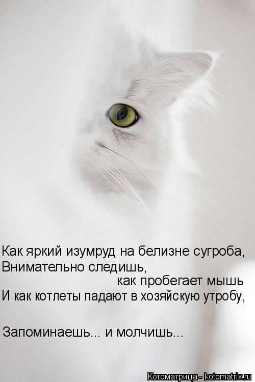 Котоматрица: Как яркий изумруд на белизне сугроба, как пробегает мышь И как котлеты падают в хозяйскую утробу, Внимательно следишь,  Запоминаешь... и молч