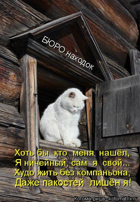 Котоматрица: БЮРО находок Хоть бы  кто  меня  нашёл, Я ничейный, сам  я  свой... Худо жить без компаньона, Даже пакостей  лишён я!