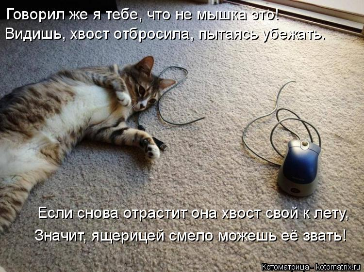 Котоматрица: Говорил же я тебе, что не мышка это! Видишь, хвост отбросила, пытаясь убежать. Если снова отрастит она хвост свой к лету, Значит, ящерицей сме?