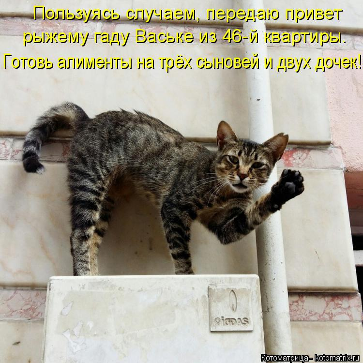 Котоматрица: Пользуясь случаем, передаю привет рыжему гаду Ваське из 46-й квартиры. Готовь алименты на трёх сыновей и двух дочек!