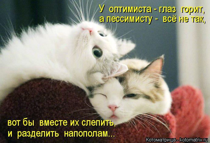 Котоматрица: У  оптимиста - глаз  горит, а пессимисту -  всё не так, вот бы  вместе их слепить, и  разделить  напополам...