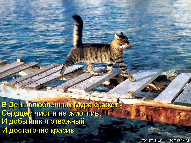 Котоматрица: В День влюблённых Мура скажет - Сердцем чист и не жмотлив,  И добытчик я отважный, И достаточно красив