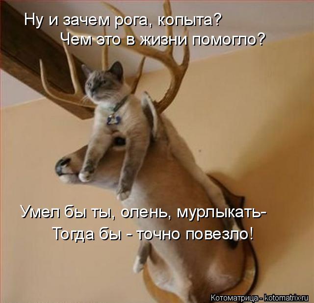 Котоматрица: Ну и зачем рога, копыта? Чем это в жизни помогло? Умел бы ты, олень, мурлыкать- Тогда бы - точно повезло!