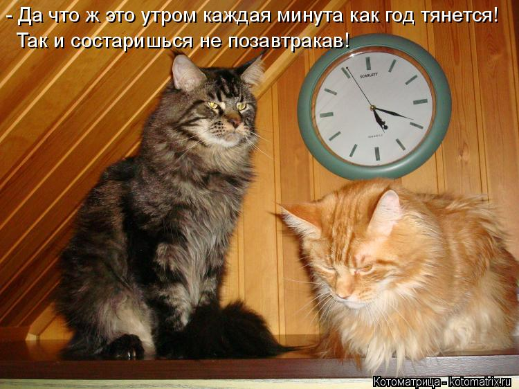 Котоматрица: - Да что ж это утром каждая минута как год тянется! Так и состаришься не позавтракав!