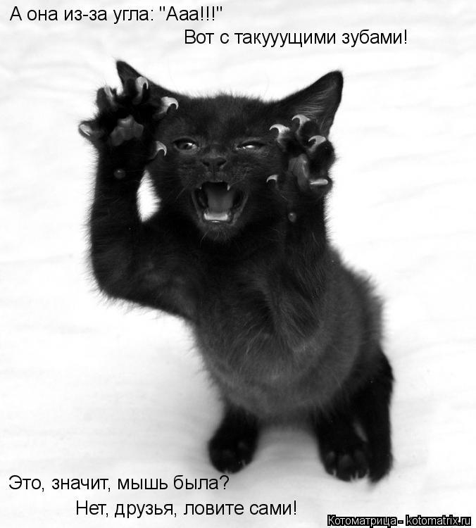 """Котоматрица: А она из-за угла: """"Ааа!!!"""" Вот с такууущими зубами! Это, значит, мышь была? Нет, друзья, ловите сами!"""