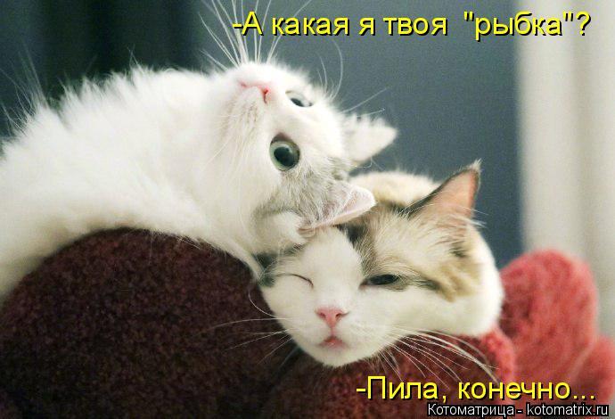 "Котоматрица: -Пила, конечно... -А какая я твоя  ""рыбка""?"