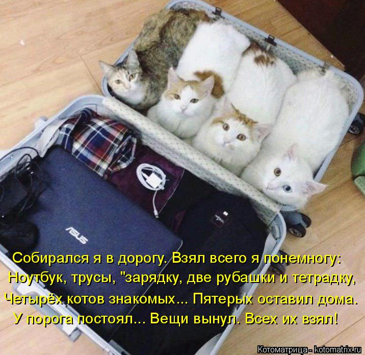 """Котоматрица: Ноутбук, трусы, """"зарядку, две рубашки и тетрадку, Четырёх котов знакомых... Пятерых оставил дома. У порога постоял... Вещи вынул. Всех их взял! С"""