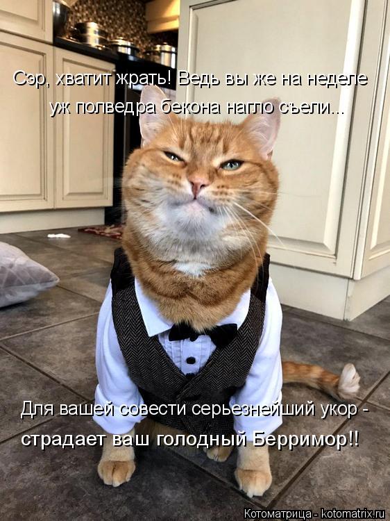 Котоматрица: Сэр, хватит жрать! Ведь вы же на неделе уж полведра бекона нагло съели... Для вашей совести серьезнейший укор - страдает ваш голодный Берримо?
