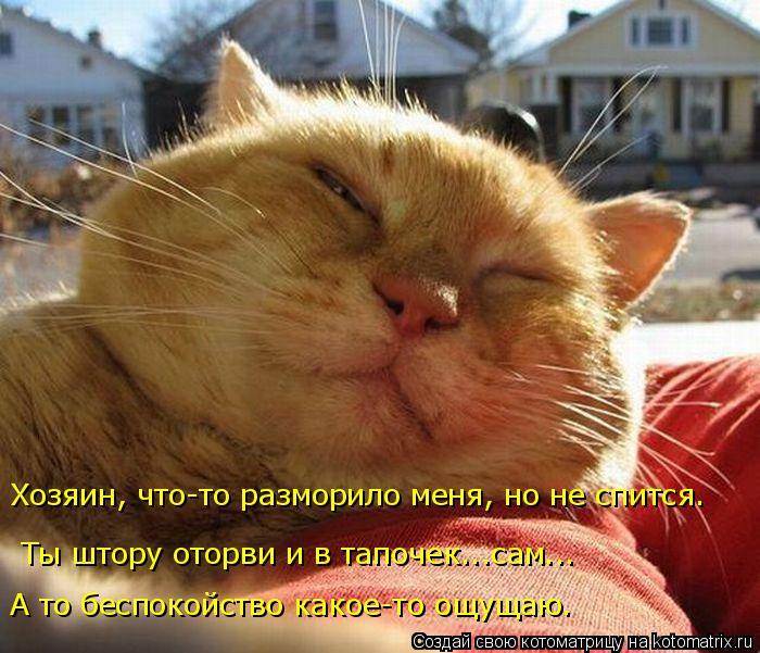 Котоматрица: Ты штору оторви и в тапочек...сам... Хозяин, что-то разморило меня, но не спится.  А то беспокойство какое-то ощущаю.