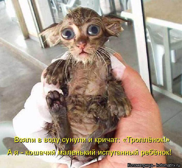 Котоматрица: Взяли в воду сунули и кричат: «Троллёнок!» А я - кошачий маленький испуганный ребёнок!