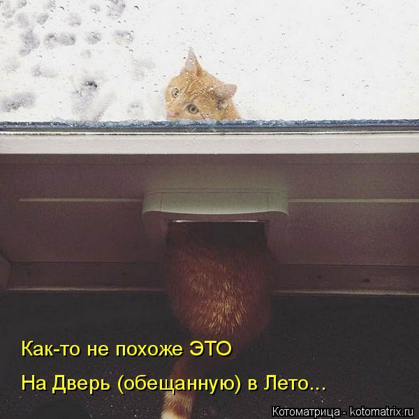 Котоматрица: Как-то не похоже ЭТО На дверь обещанную в лето... На Дверь (обещанную) в Лето...