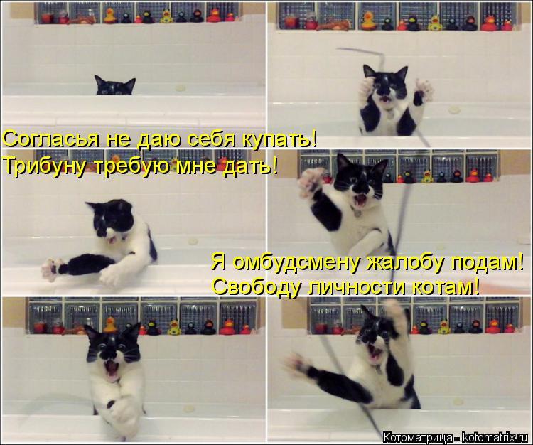 Котоматрица: Согласья не даю себя купать! Трибуну требую мне дать! Я омбудсмену жалобу подам! Свободу личности котам!
