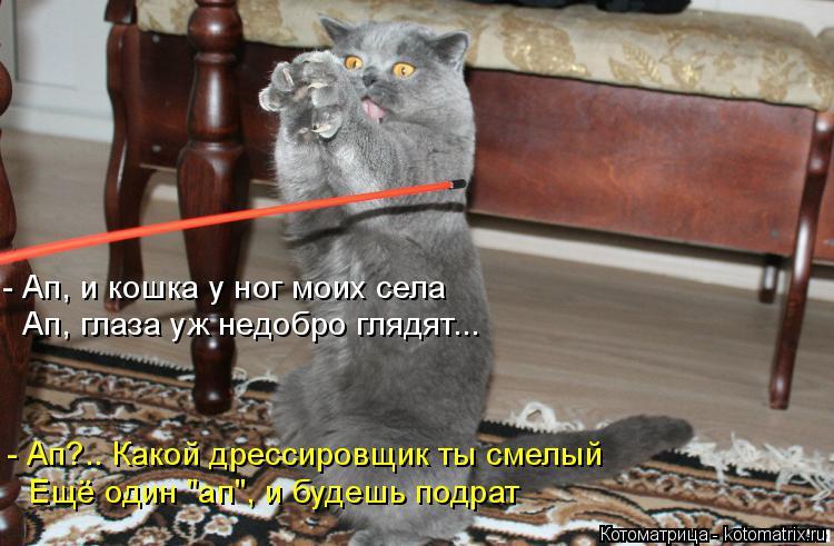 """Котоматрица: - Ап, и кошка у ног моих села Ап, глаза уж недобро глядят...  - Ап?.. Какой дрессировщик ты смелый  Ещё один """"ап"""", и будешь подрат"""