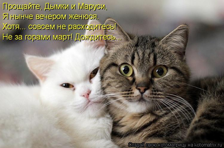 Котоматрица: Прощайте, Дымки и Маруси, Я нынче вечером женюся. Хотя... совсем не расходитесь! Не за горами март! Дождитесь...