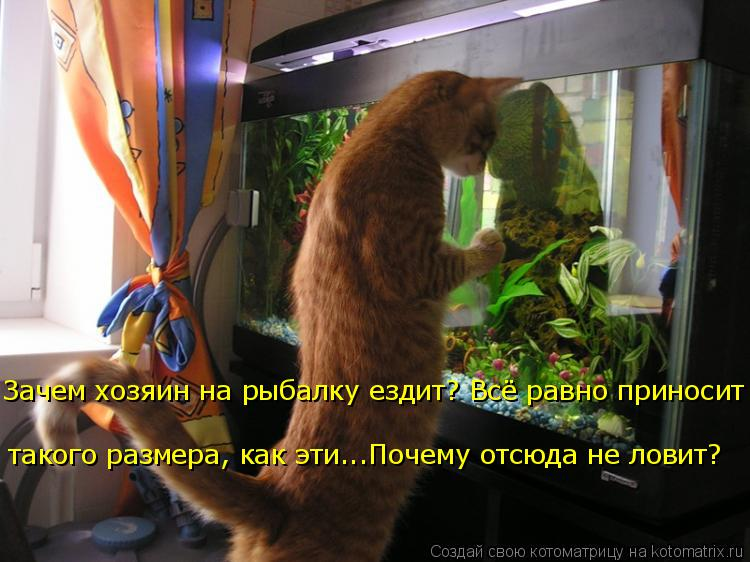 Котоматрица: Зачем хозяин на рыбалку ездит? Всё равно приносит  такого размера, как эти...Почему отсюда не ловит?