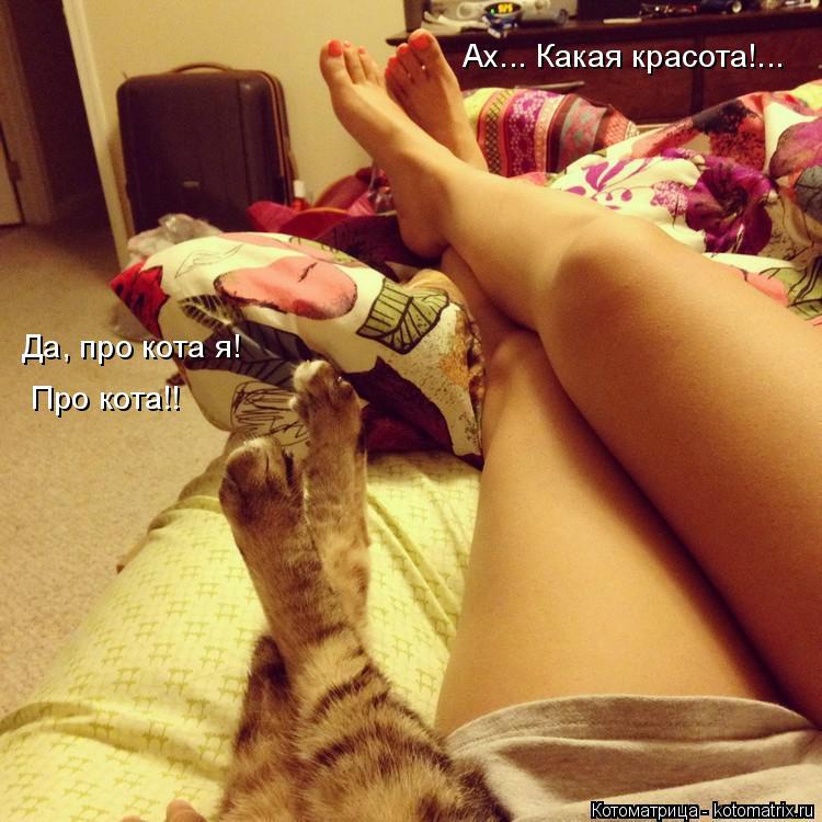 Котоматрица: Ах... Какая красота!... Да, про кота я!  Про кота!!