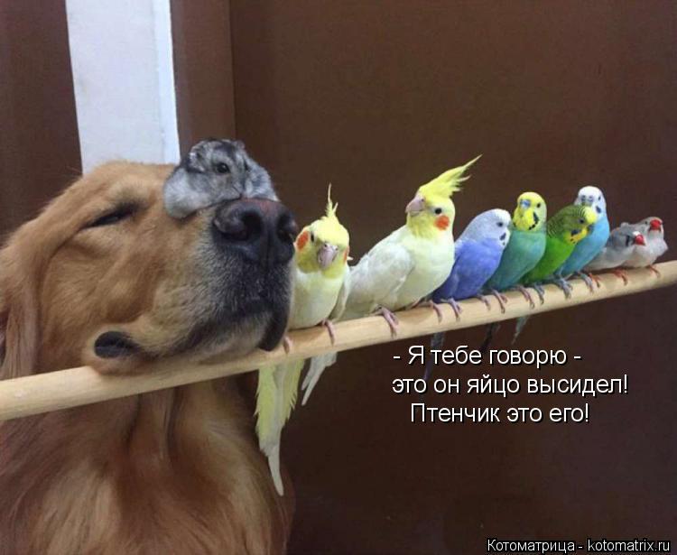 Котоматрица: - Я тебе говорю -  это он яйцо высидел! Птенчик это его!