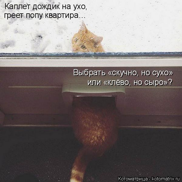 Котоматрица: Каплет дождик на ухо,  греет попу квартира…  Выбрать «скучно, но сухо»  или «клёво, но сыро»?