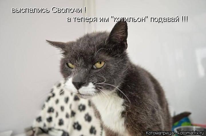 """Котоматрица: выспались Сволочи ! а теперя им """"котильон"""" подавай !!!"""