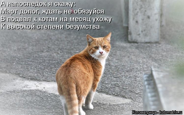 Котоматрица: А напоследок я скажу: Март долог, ждать не обязуйся  В подвал к котам на месяц ухожу К высокой степени безумства