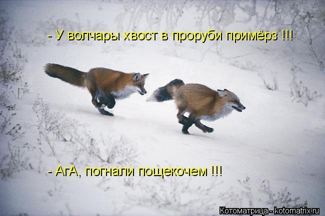 Котоматрица: - У волчары хвост в проруби примёрз !!! - АгА, погнали пощекочем !!!