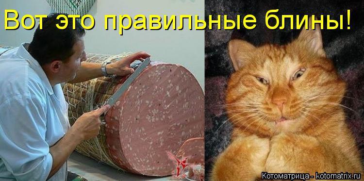 http://kotomatrix.ru/images/lolz/2018/02/17/kotomatritsa_i.jpg