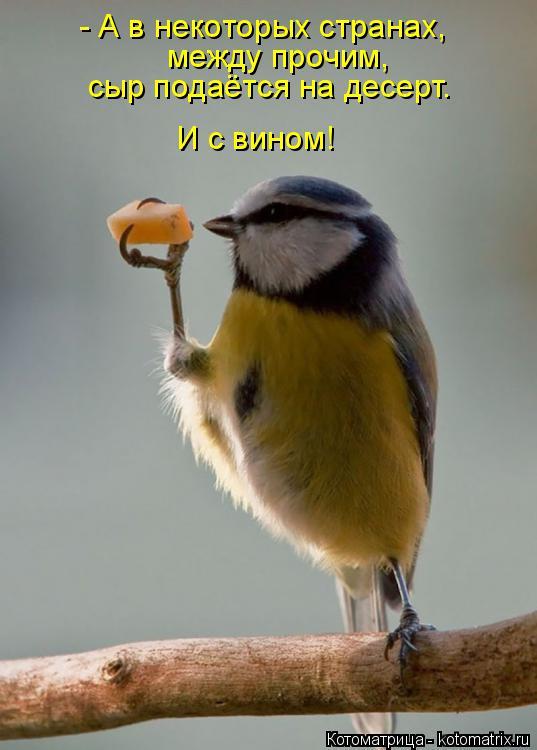 Котоматрица: - А в некоторых странах, между прочим, сыр подаётся на десерт. И с вином!