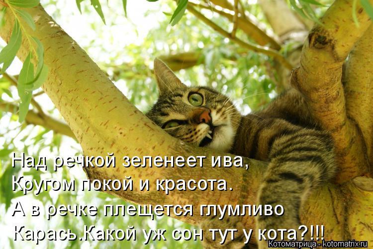 Котоматрица: Над речкой зеленеет ива,  Кругом покой и красота. А в речке плещется глумливо Карась.Какой уж сон тут у кота?!!!