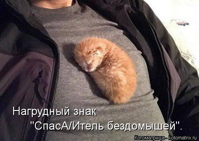 """Котоматрица: Нагрудный знак """"СпасА/Итель бездомышей""""."""
