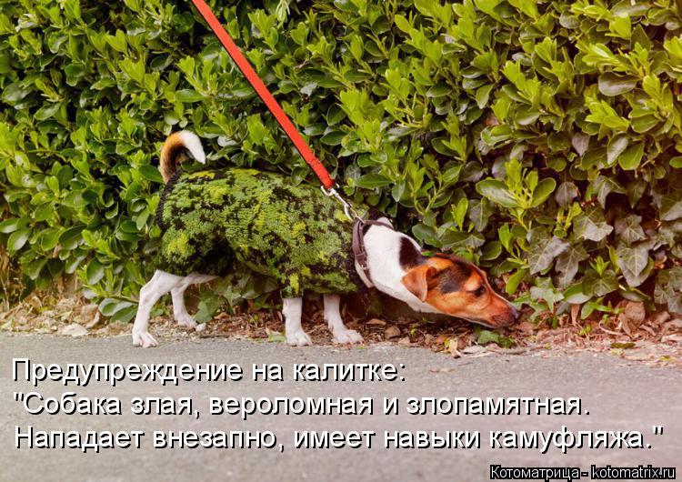 """Котоматрица: Предупреждение на калитке: """"Собака злая, вероломная и злопамятная. Нападает внезапно, имеет навыки камуфляжа."""""""