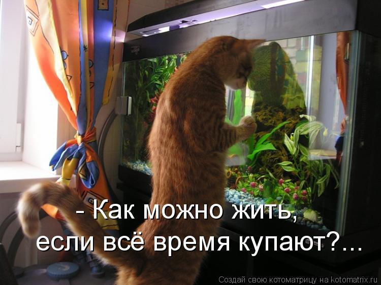Котоматрица: - Как можно жить, если всё время купают?...