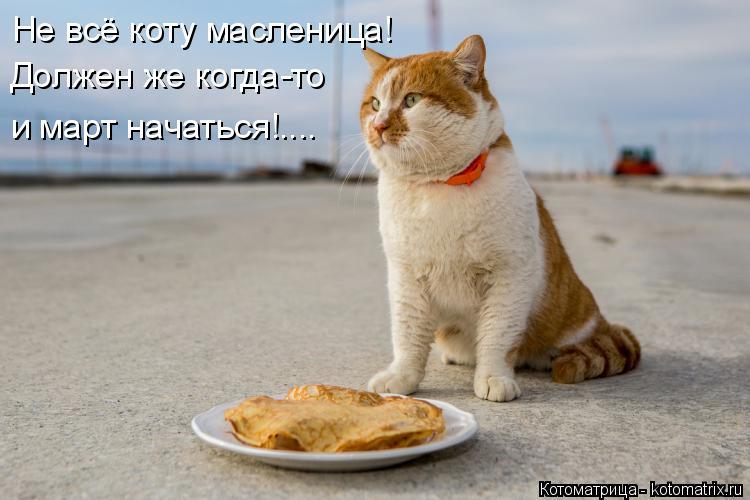 Котоматрица: Не всё коту масленица! Должен же когда-то и март начаться!....