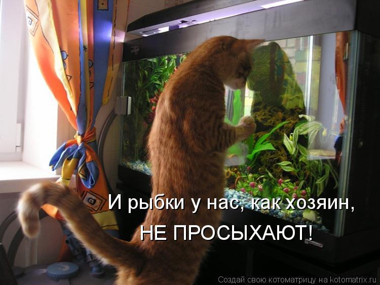 Котоматрица: И рыбки у нас, как хозяин,  НЕ ПРОСЫХАЮТ!