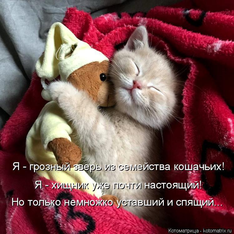 Котоматрица: Я - грозный зверь из семейства кошачьих! Я - хищник уже почти настоящий! Но только немножко уставший и спящий...