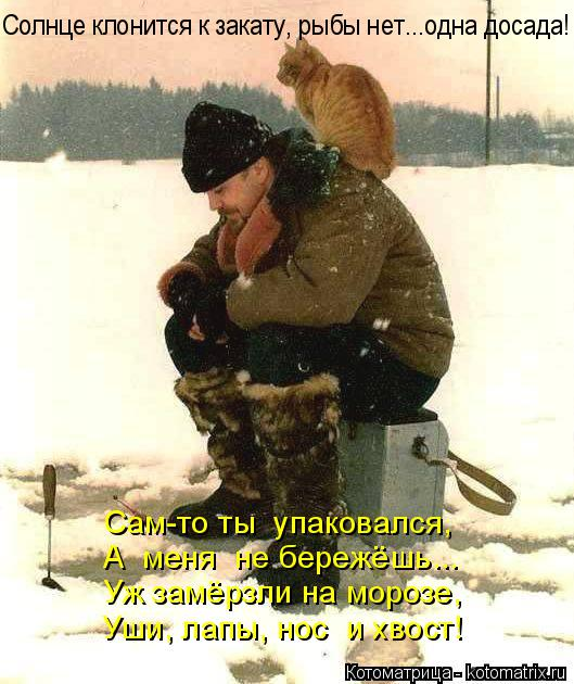 Котоматрица: А  меня  не бережёшь... Уж замёрзли на морозе,  Уши, лапы, нос  и хвост! Сам-то ты  упаковался, Солнце клонится к закату, рыбы нет...одна досада!