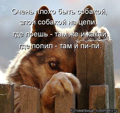 Котоматрица: Очень плохо быть собакой, злой собакой на цепи, где поешь - там же и какай, где попил - там и пи-пи.