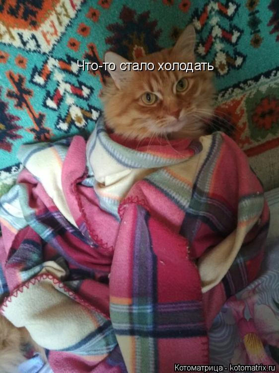 Котоматрица: Что-то стало холодать
