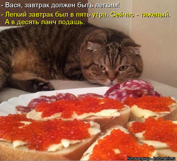 Котоматрица: - Вася, завтрак должен быть легким! - Легкий завтрак был в пять утра. Сейчас - тяжелый. А в десять ланч подашь.