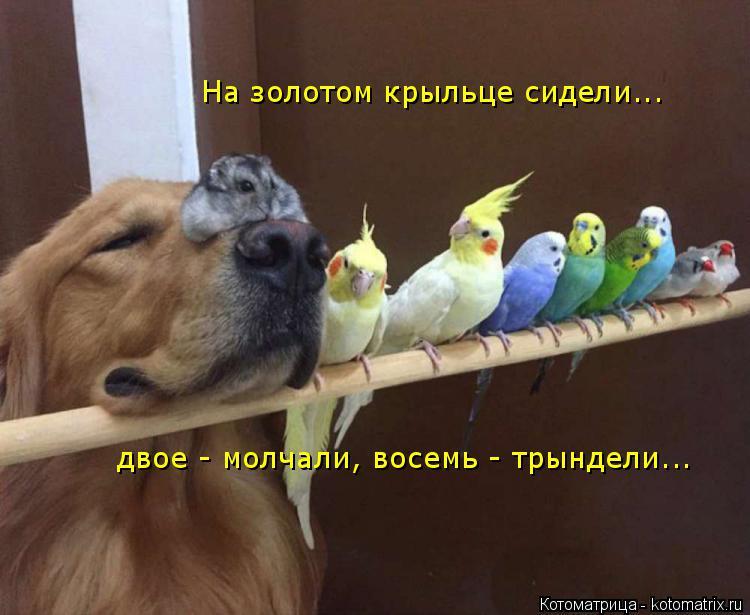 Котоматрица: На золотом крыльце сидели... двое - молчали, восемь - трындели...