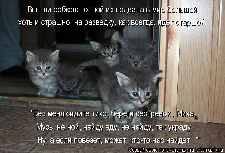 """Котоматрица: хоть и страшно, на разведку, как всегда, идет старшой. """"Без меня сидите тихо, береги сестренок , Миха, Мусь, не ной, найду еду, не найду, так укра"""