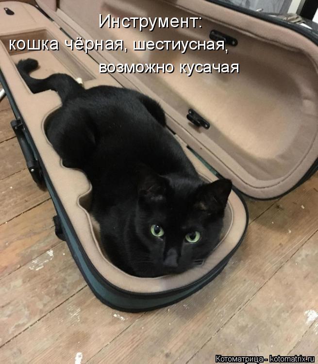 Котоматрица: Инструмент:  кошка чёрная , шестиусная , возможно кусачая
