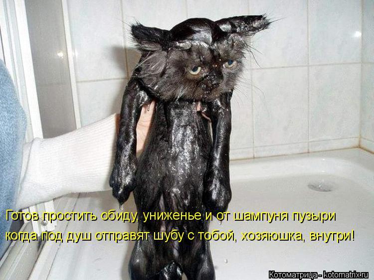 Котоматрица: Готов простить обиду, униженье и от шампуня пузыри  когда под душ отправят шубу с тобой, хозяюшка, внутри!