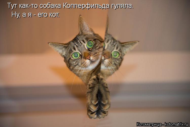 Котоматрица: Тут как-то собака Копперфильда гуляла. Ну, а я - его кот.