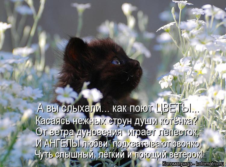 Котоматрица: А вы слыхали... как поют ЦВЕТЫ... Касаясь нежных струн души котёнка? И АНГЕЛЫ любви  подхватывают звонко, Чуть слышный, лёгкий и поющий ветерок