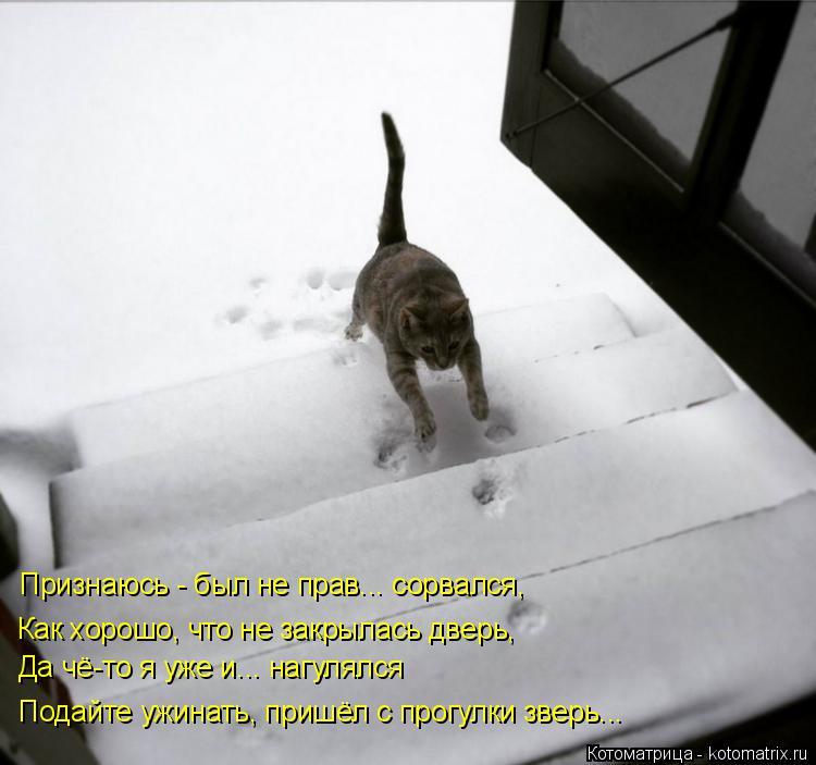 Котоматрица: Признаюсь - был не прав... сорвался, Да чё-то я уже и... нагулялся Как хорошо, что не закрылась дверь, Подайте ужинать, пришёл с прогулки зверь...