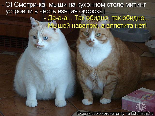 Котоматрица: - О! Смотри-ка, мыши на кухонном столе митинг устроили в честь взятия окорока! - Да-а-а... Так обидно, так обидно... Мышей навалом, а аппетита нет!