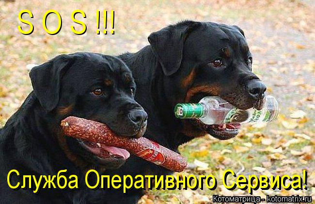 Котоматрица: S O S !!! Служба Оперативного Сервиса! Служба Оперативного Сервиса!