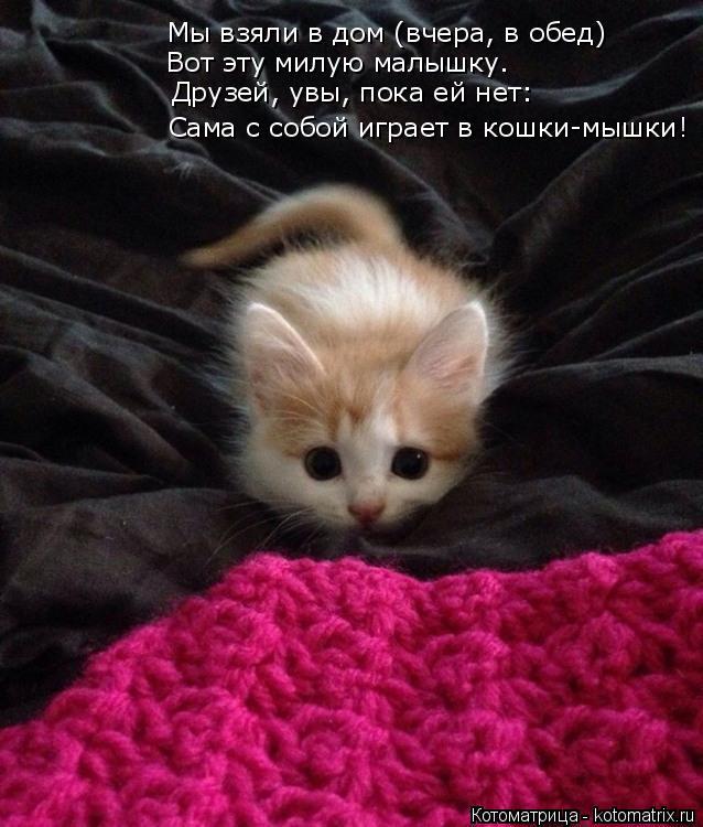 Котоматрица: Мы взяли в дом (вчера, в обед) Вот эту милую малышку. Друзей, увы, пока ей нет: Сама с собой играет в кошки-мышки!